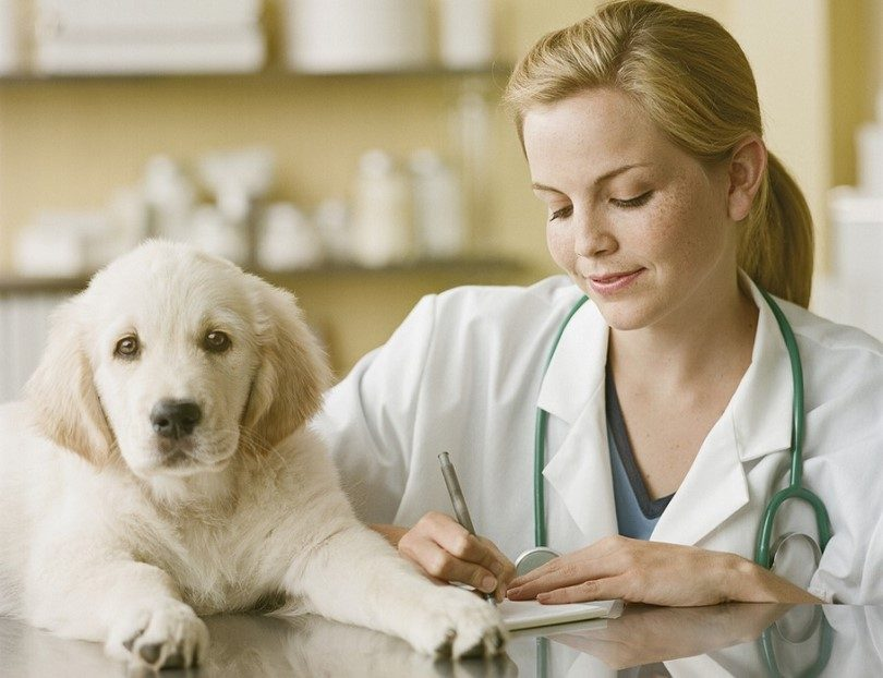Pet Care is essential to maintain your Pets Healthy