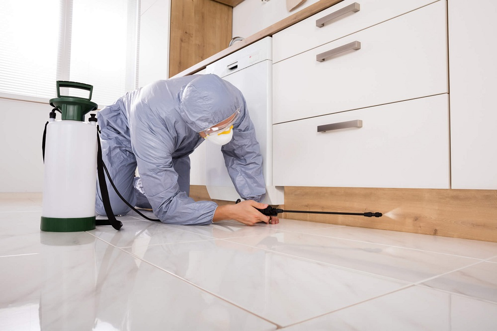 Why Do I Buy Pest Control Wholesale?